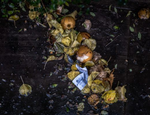 Odpady bio - jak segregować?